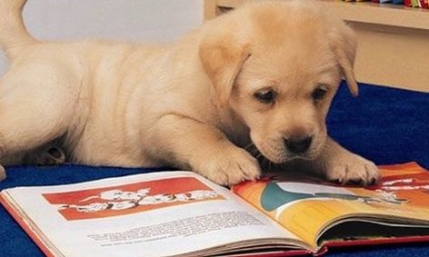 Read with Biscuit