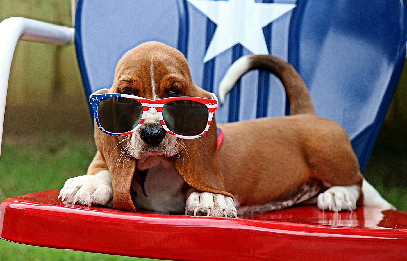 Kid and Pet Safety on the Fourth of July