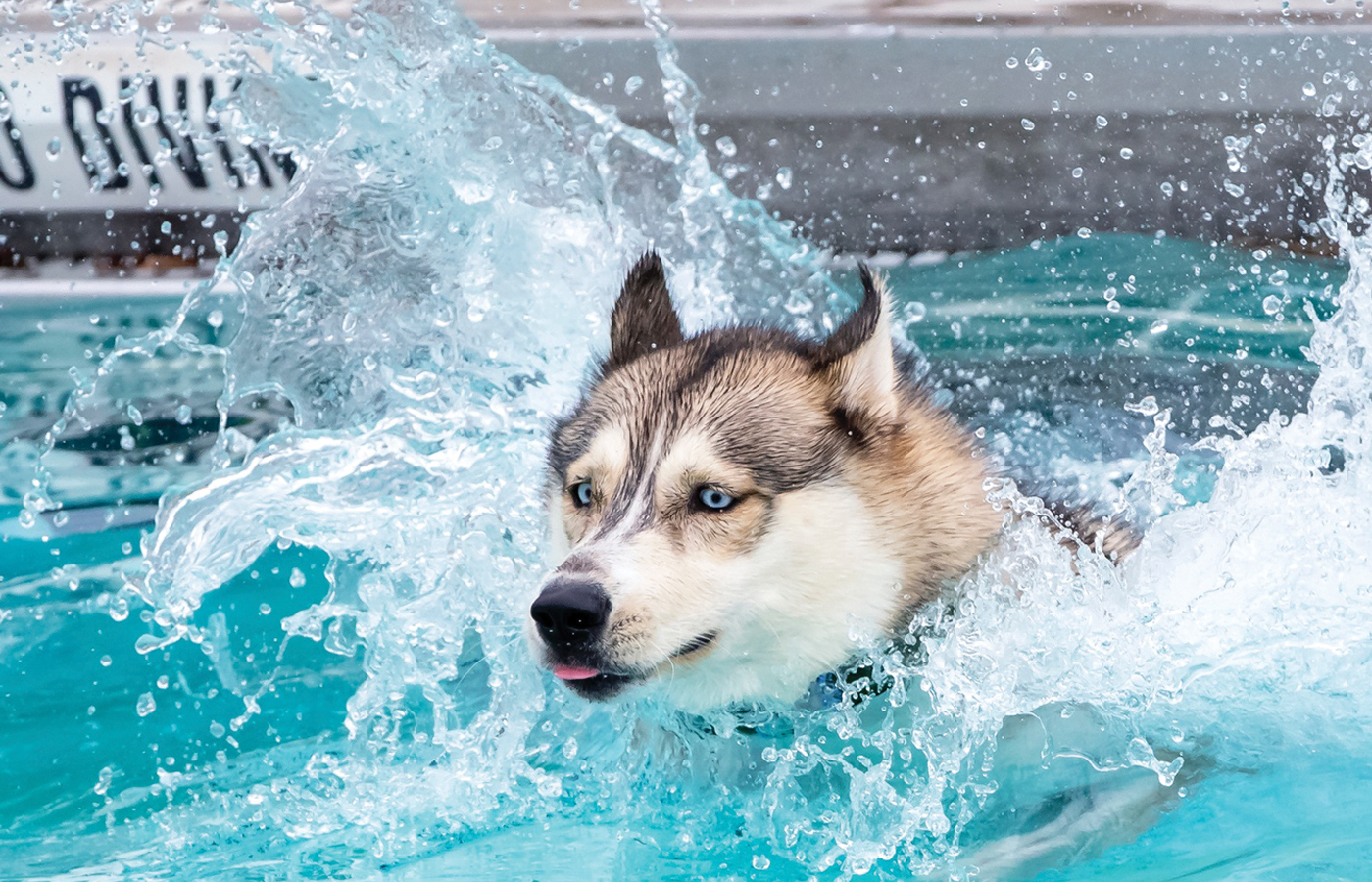 Pooch Pool Parties & Other Doggie Delights