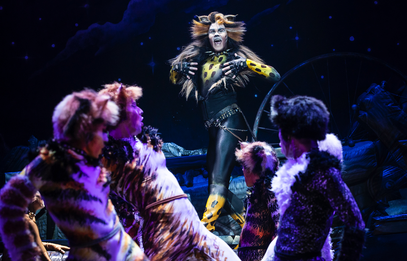 "Review: The New Life of ""Cats"""