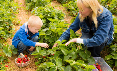 Pick Berries At These Farms!