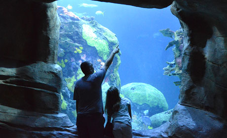 A Leisurely Day at Tennessee Aquarium