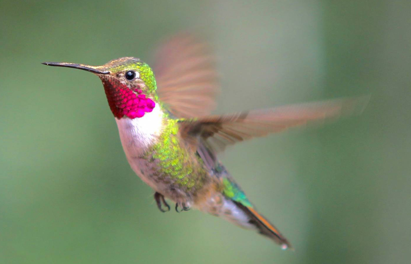 Celebrate Hummingbirds