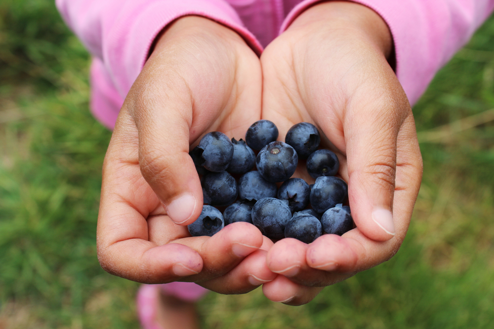 Ripe Summer Berries are Ready Across Tennessee