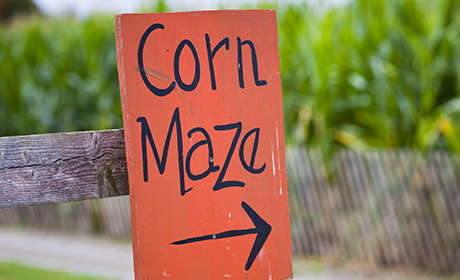 Corn Maze Opens at Lucky Ladd Farms
