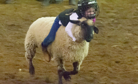 Kids' Events at the Rodeo: What to Know