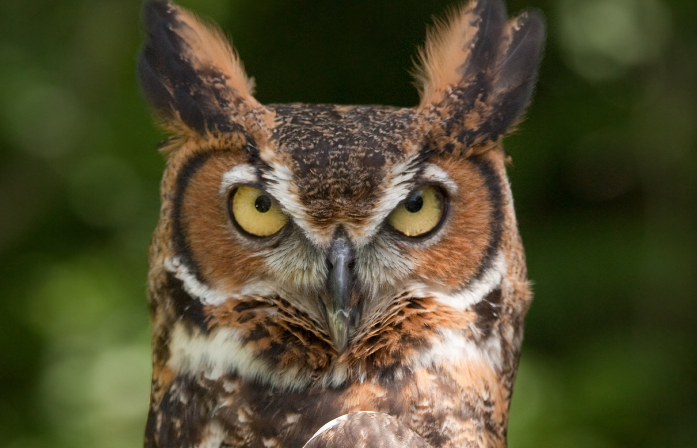 Knee-High Naturalist: All About Owls