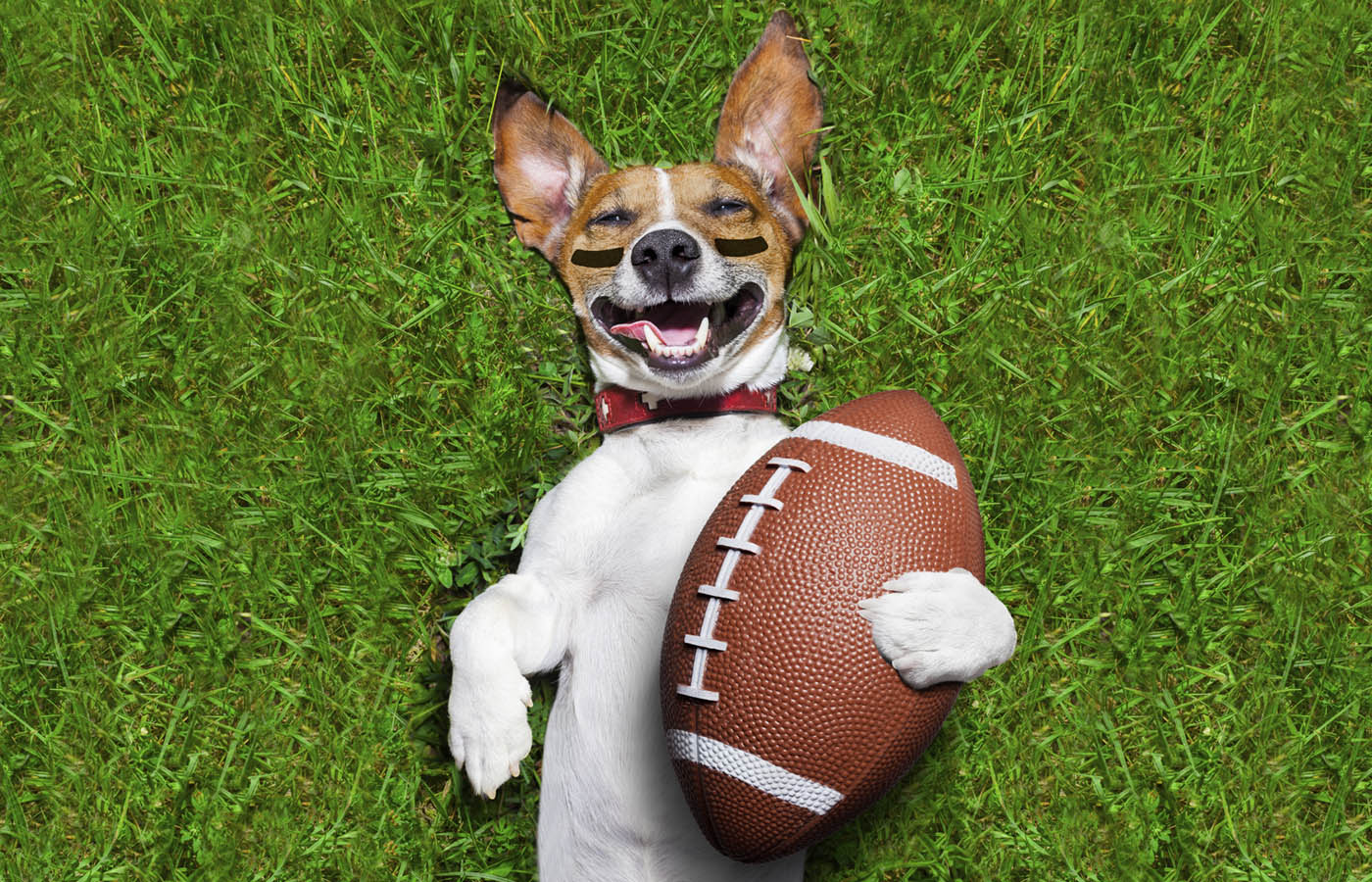 Everything You Need To Know About This Year's Puppy Bowl