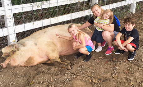 Rescued Animal Care at The Gentle Barn
