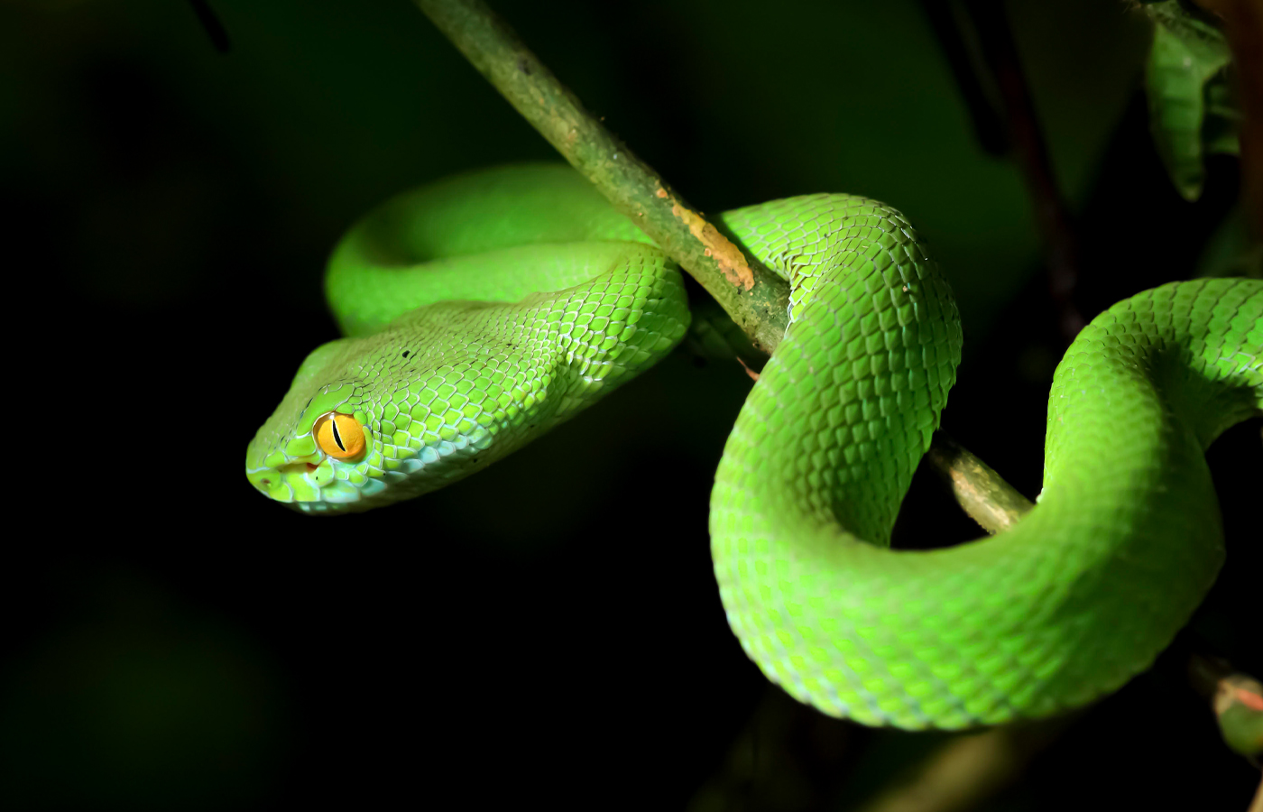 Snakes: Mysteries in Nature