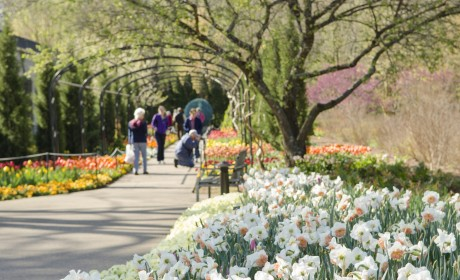 Cheekwood to Offer Free Admission to Military Personnel and Families this Summer