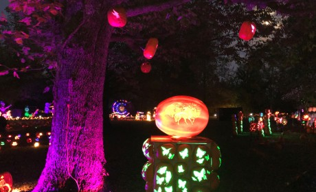MOM REPORT: A Jolly Time at Jack's Pumpkin Glow