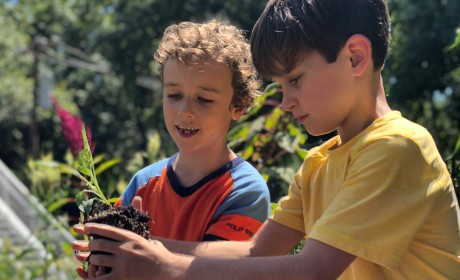 Linden Waldorf School Celebrates 100 Years of Waldorf Education