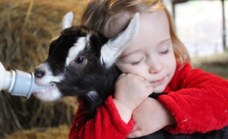 Cuddle Baby Goats at Noble Springs Dairy