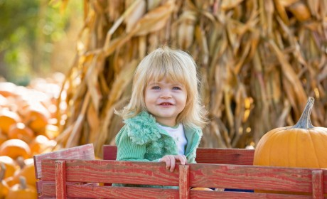 Pumpkin Patches & Corn Mazes ROUND UP