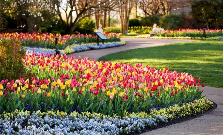 Escape to Holland Without Leaving Nashville During Cheekwood in Bloom