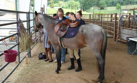 Williamson County Extension Office is Offering Equine Education