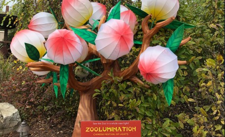 Sneak Peek of Zoolumination at Nashville Zoo