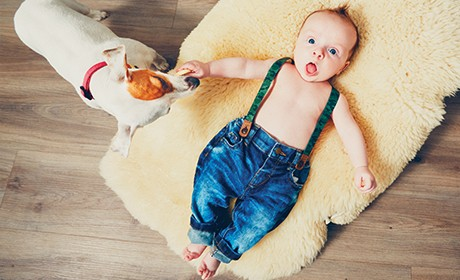 Prep the Dog for Baby