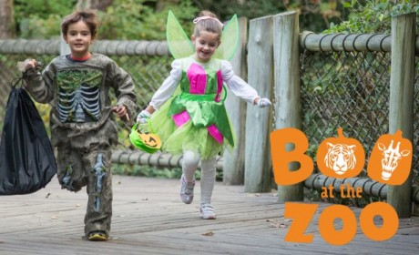 Tickets On Sale Now For Boo At The Zoo
