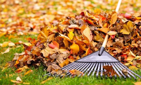 City of Franklin Curbside Leaf Collection Begins This Week