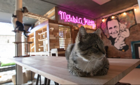 Mewsic Kitty Cafe Announces Permanent Closure