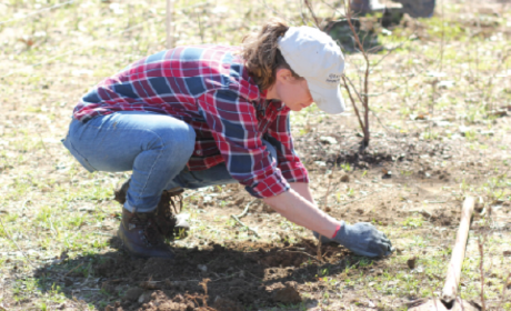 Spring Hill Looking for Volunteers to Help Plant Trees Along Rutherford Creek