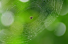 Hunt for Spectacular Spiders