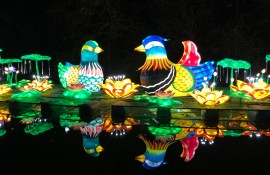 Zoolumination: Chinese Festival of Lights